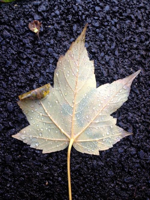 Sad Leaf